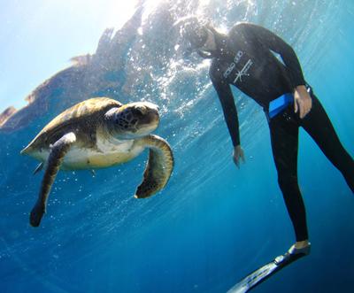freediving-turtle