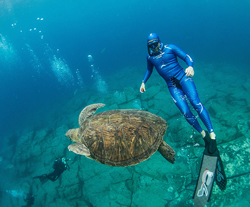freedive-with-turtle
